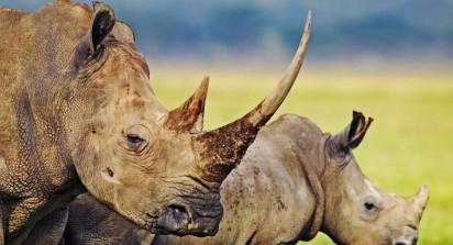 3-day-photographic-safari