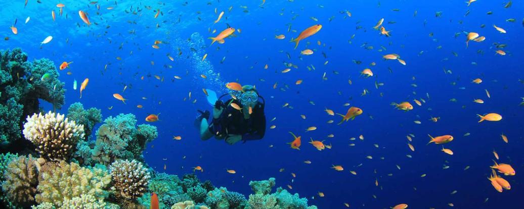 scuba_diving_med1-1-1036x414