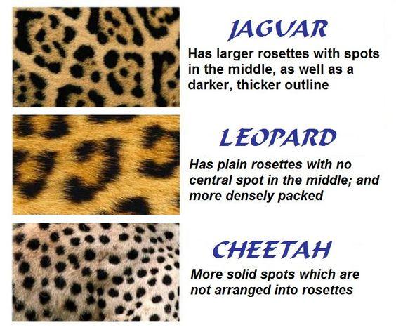 Why Do Cheetahs Have Spots Emdoneni Lodge